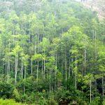 Rừng mang lại nhiều lợi ích cho con người, hãy chung tay bảo vệ rừng