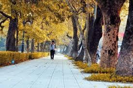 Bài văn nêu cảm nghĩ về mùa  thu