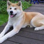 Em hãy tả con chó mà em yêu quý nhất.