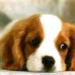 Bài văn mẫu tả con chó nuôi trong nhà