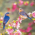 """Cảm nhận của em về 3 khổ thơ cuối của bài Thơ :Mùa xuân nho nhỏ"""" của tác giả Thanh Hải"""