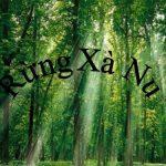 """Phân tích hình tượng cây xà nu trong truyện ngắn """" Rừng xà nu"""" của Nguyễn Trung Thành"""