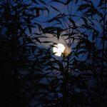 Bài văn tả đêm trăng