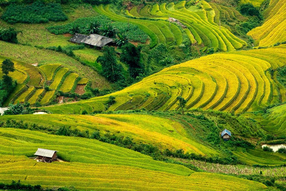 Bài mẫu: Phân tích bộ tranh tứ bình trong bài thơ Việt Bắc.