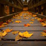 Bình Giảng khổ thơ thứ 2 trong Đây mùa thu tới của Xuân Diệu