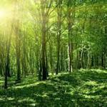 Suy nghĩ về vai trò của rừng và việc bảo vệ rừng – Nghị luận xã hội