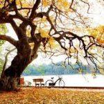 Cảm nghĩ về mùa thu