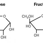 Lý thuyết cacbohidrat là gì và vai trò chức năng của cacbohidrat