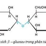 Lý thuyết chung về xenlulozo và các tính chất hóa học đặc trưng