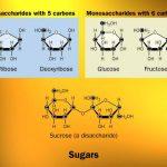 Trắc nghiệm tổng hợp lý thuyết và bài tập cacbohidrat cơ bản