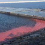 Nghị luận xã hội về ô nhiễm môi trường nước