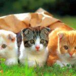 Bài văn lớp 4 tả con mèo nhà em