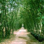 Bài văn mẫu: Biểu cảm về cây tre Việt Nam