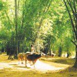 Bài văn miêu tả về cây tre Việt Nam