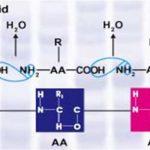 Hợp chất Protein là gì? Khái niệm và của tính chất của protein
