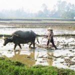 Bài văn mẫu lớp 5: Tả một bác nông dân đang cày ruộng