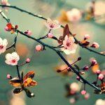 Lắng nghe tiếng lòng của Thanh Hải trong bài thơ Mùa xuân nho nhỏ.